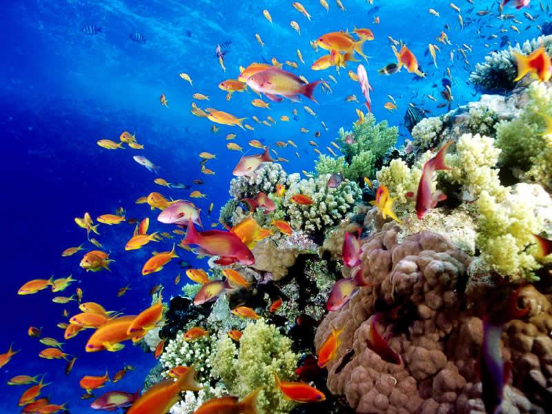Nueva reserva panameña de protección marina es casi tan grande como su territorio