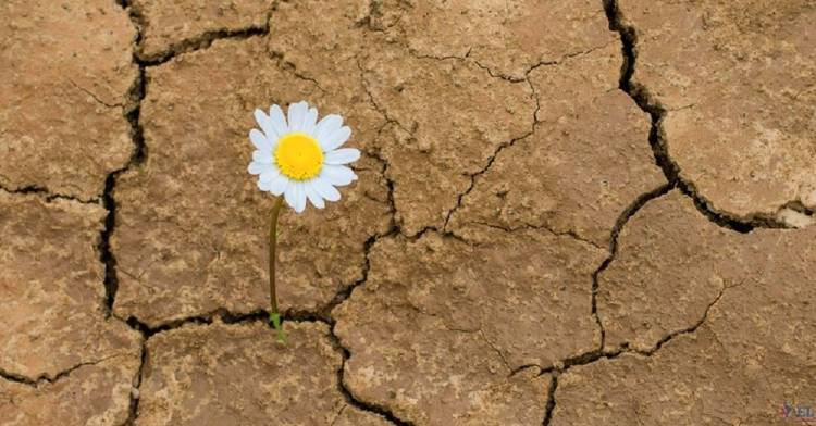 Logoterapia: esto es lo que Viktor Frankl tiene para enseñar sobre superar la adversidad