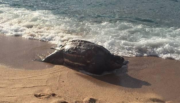 Una tortuga gigante aparece misteriosamente muerta en la costa catalana