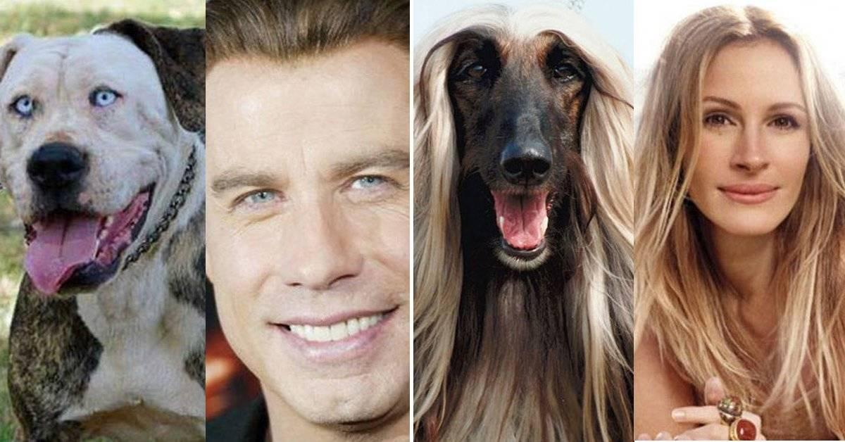 15 animales que se parecen mucho a estos famosos. ¡Qué fuerte!