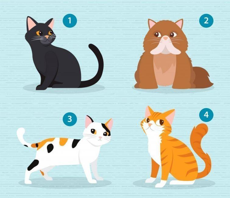 Elige un gato