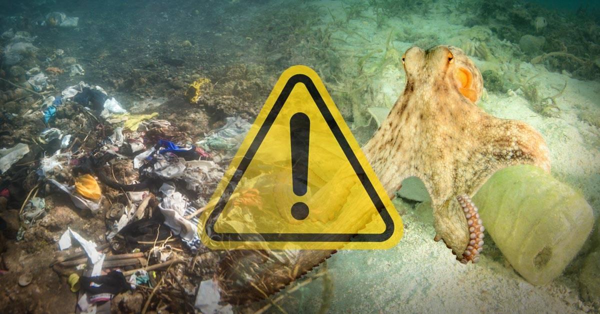 Se triplicó el plástico en el océano Atlántico, según lo reveló un estudio