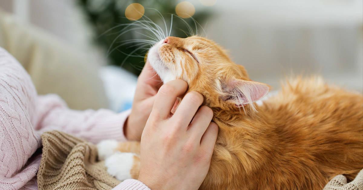 El ronroneo de un gato podría ser la mejor medicina para el dolor físico
