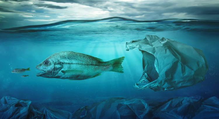 peces plástico
