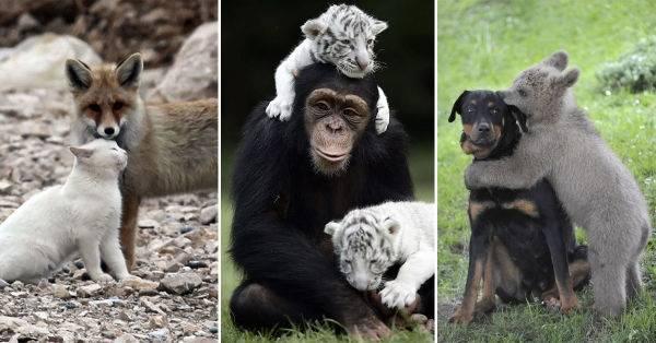 32 imágenes de inusuales amistades entre animales