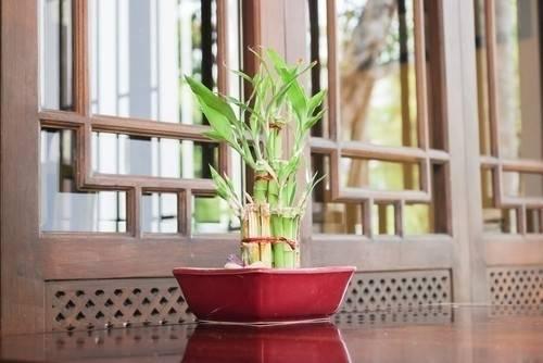 Simbología japonesa de la limpieza y cómo aprovecharla para atraer energías..
