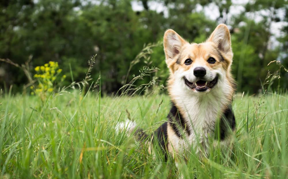 Medicina cannabica: una opción para mascotas con epilepsia