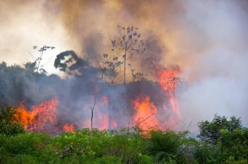 #PrayforAmazonia: el hashtag que viralizó el problema de los incendios en Brasil