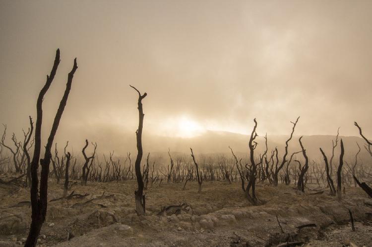 ¿Qué es el ecocidio? Definición, ejemplos y cómo evitarlo