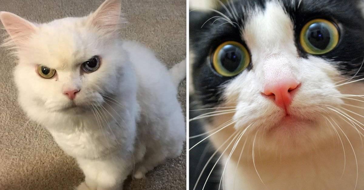 5 consejos de especialistas para hacerte querer por los gatos