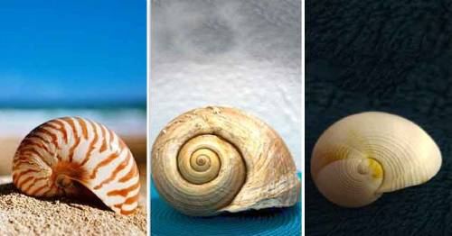 ¿Sientes curiosidad acerca de los mensajes psíquicos? Descubre el mensaje de las conchas marinas