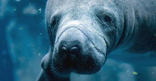 Los animales marinos serán los primeros en desaparecer por el cambio climático