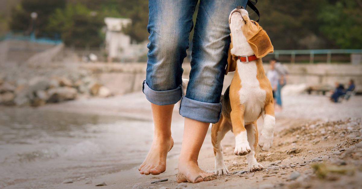 Por qué los perros son la clave para combatir el sedentarismo