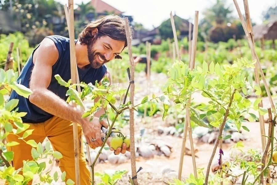 Según la ONU la agricultura ecológica es la mejor forma de alimentar al mundo
