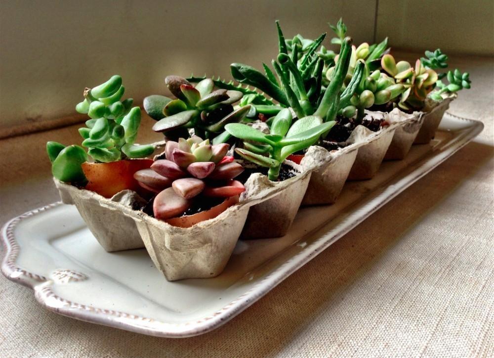 C mo cultivar un jard n en espacios peque os 10 ideas for Jardines en espacios pequenos fotos