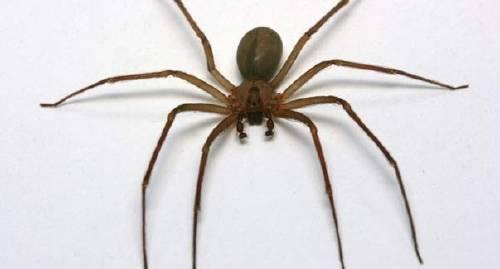 Descubren una nueva especie de araña: ¿qué hacer si te muerde una?