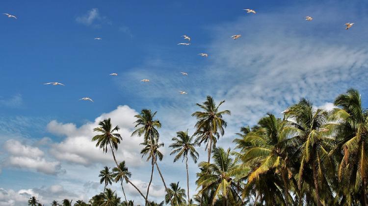 ¿Por qué es malo el aceite de palma? Consecuencias al ambiente