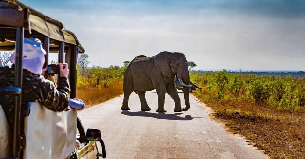 Así es como un nuevo turismo está salvando a los animales de África