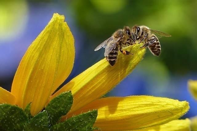 Razones para no temerle a las abejas