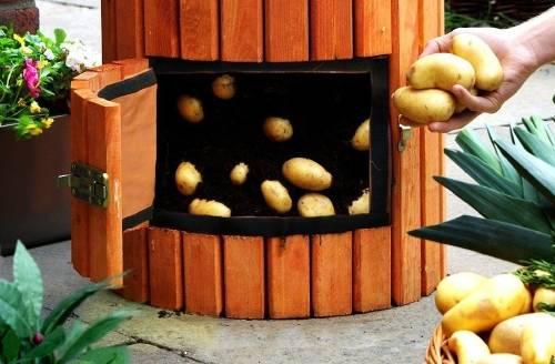 Cómo producir kilos de papa en 4 pasos