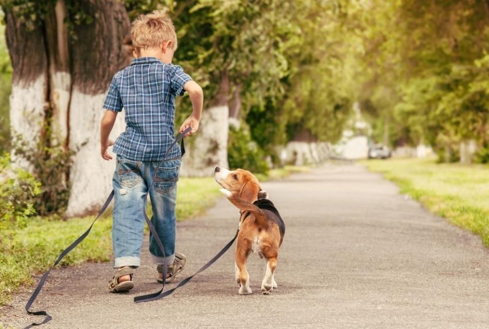caminando con mascota