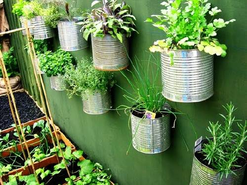 Plantas medicinales para cultivar en casa