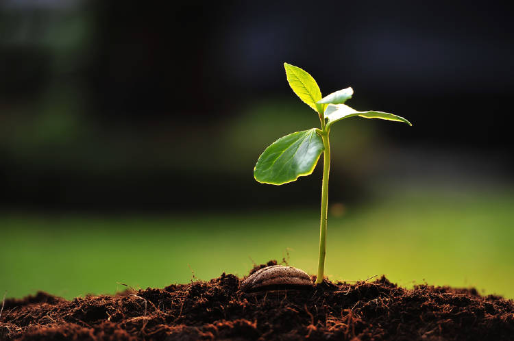 planta creciendo para convertirse en un arbol