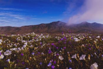 Desierto florido y su paisaje