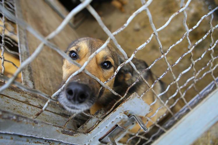 perros jaula crueldad animal