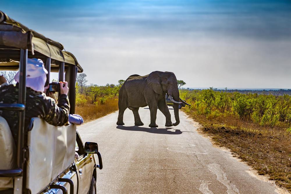 ¿Cómo ha afectado la pandemia al ecoturismo y a la conservación en Kenia?
