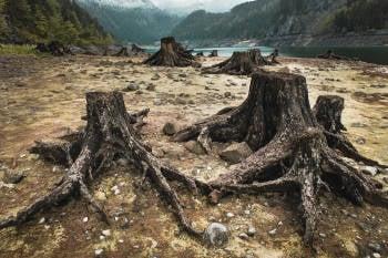 imagen de los árboles luego de ser cortados