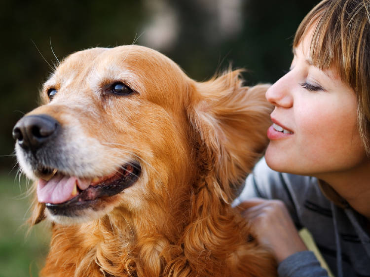 mujer le habla a un perro