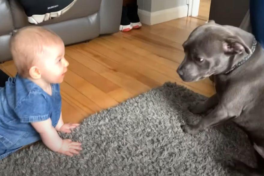 No te pierdas la reacción de este perro al momento de conocer a un bebé