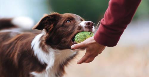 12 indicadores de que tienes un perro muy inteligente