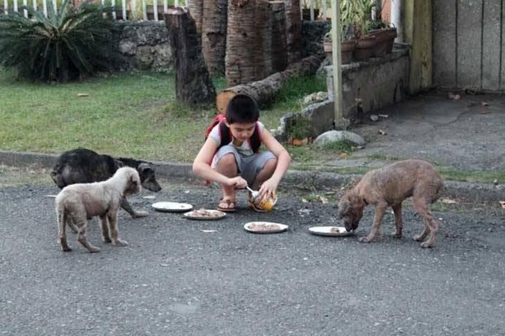 refugio animales