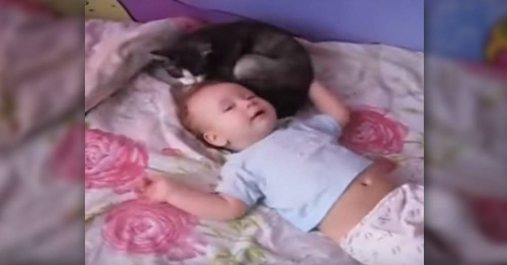 Este bebé lloraba sin parar hasta que su compañero se le acerca