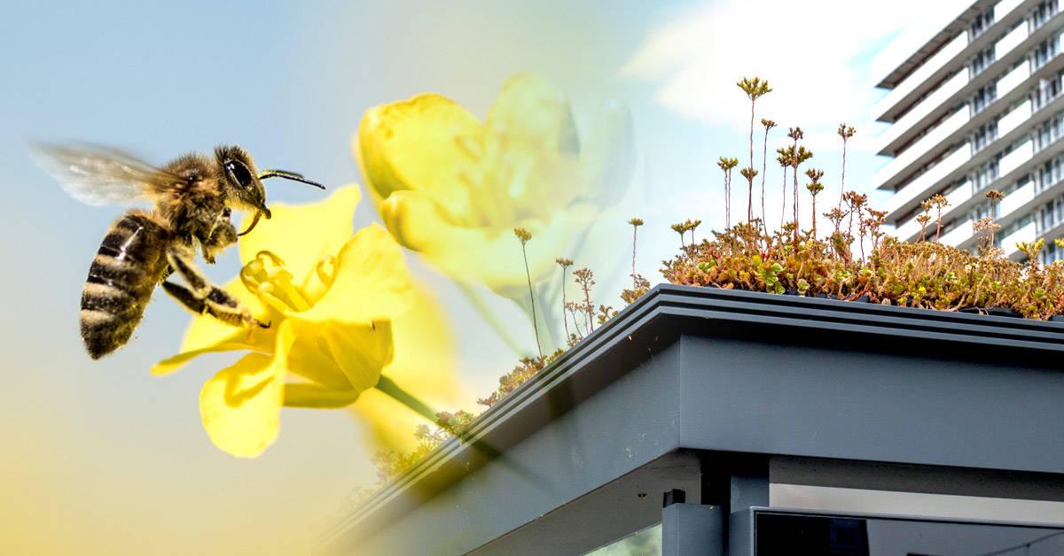 Ahora puedes alojarte en estas cabañas llenas de abejas en Rumania