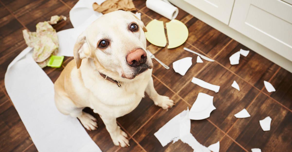 7 Trucos para que tu perro no te destroce la casa cuando se queda solo