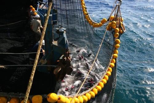 sobrepesca barco pesquero