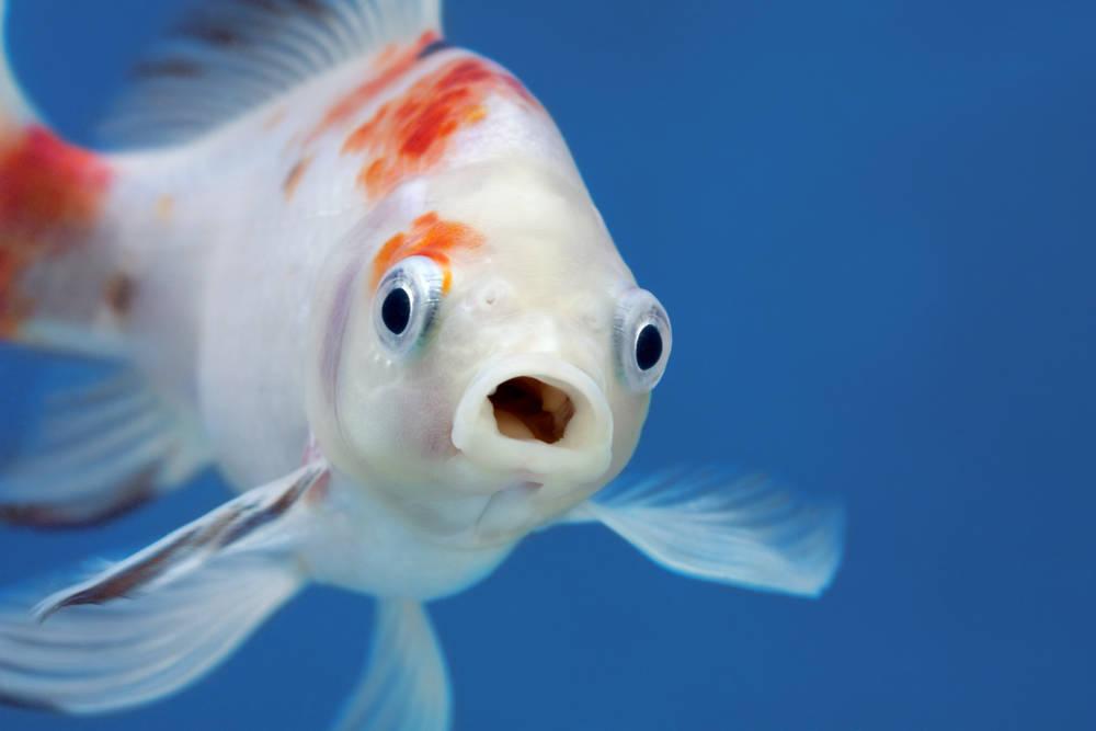 """Este pez tiene una \""""silla de ruedas\"""" y ahora es más feliz que nunca"""