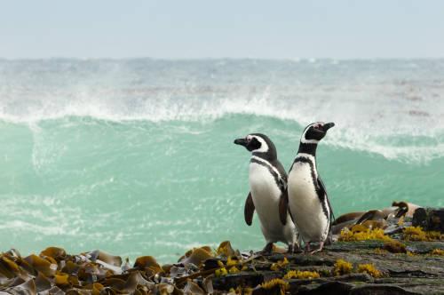"""Avistan por primera vez un """"extraño"""" pingüino blanco en las Islas Galápagos"""