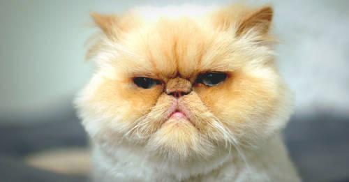 7 cosas que tu gato odia aunque no lo sepas