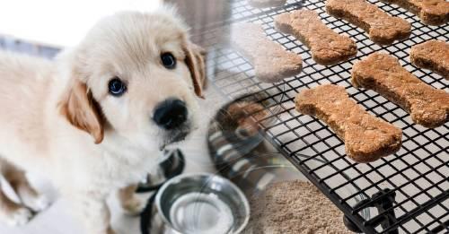 Cómo hacer golosinas para perros caseras y saludables