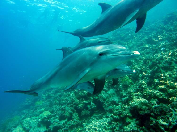 Un grupo de delfines nadando