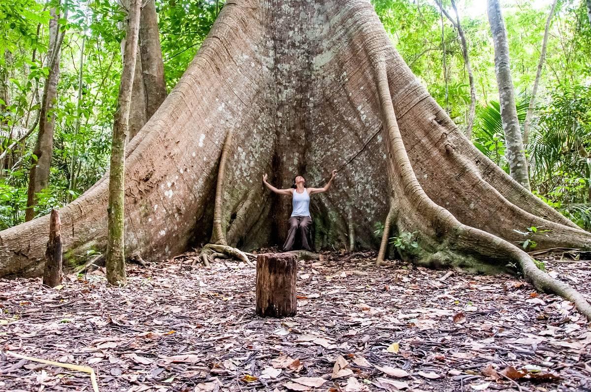 """Amazonas: en busca del """"árbol-abuela"""""""