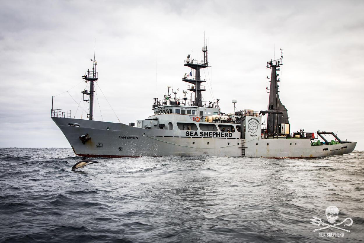 Conoce Sea Shepherd y su acción directa para defender los océanos