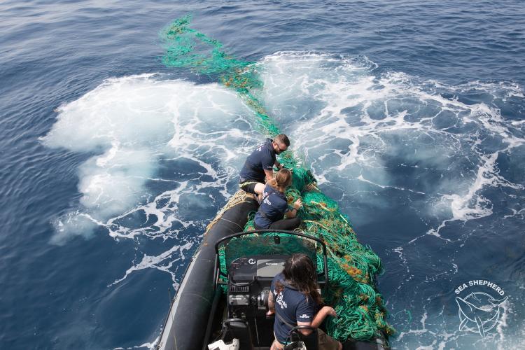 Sea Shepherd recoge red fantasma.