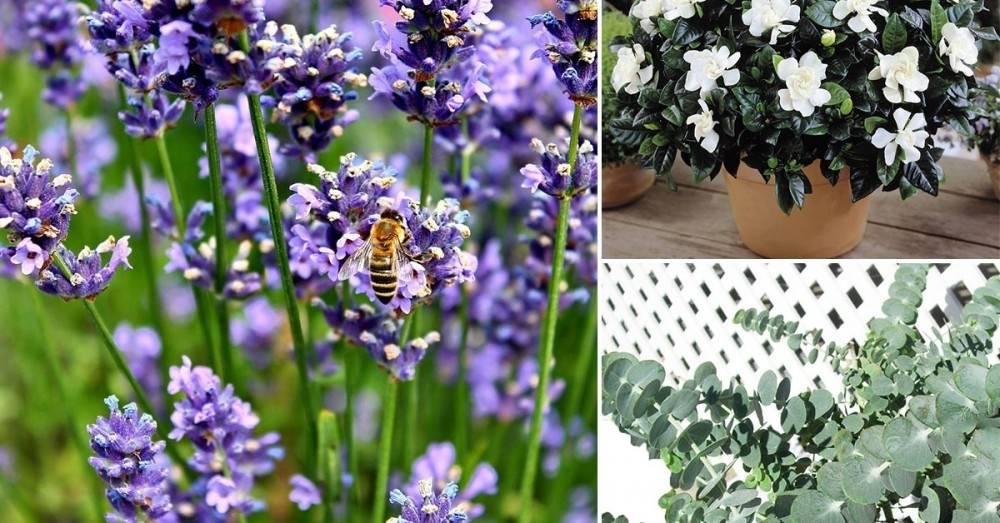 Las 5 mejores plantas para darle una fragancia natural y fresca a tu hogar
