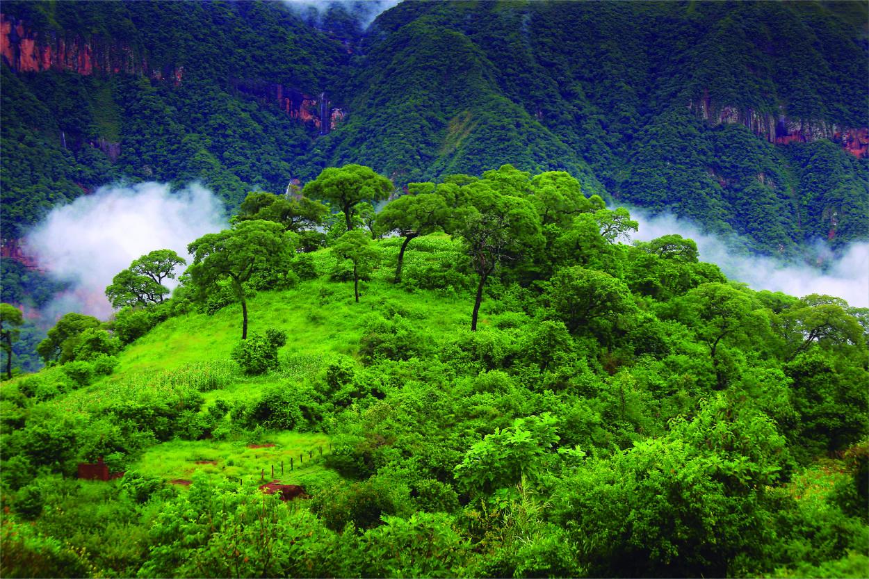 Así es la Reserva de la Biósfera de las Yungas en el norte argentino