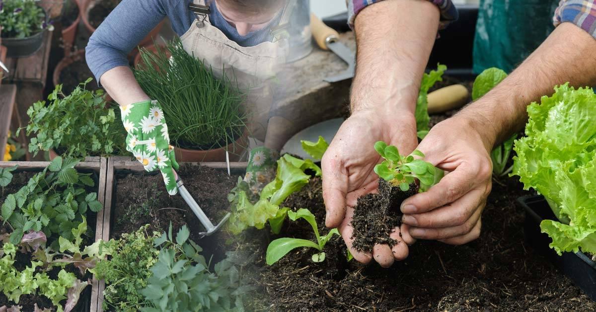 Qué plantar durante septiembre en ambos hemisferios